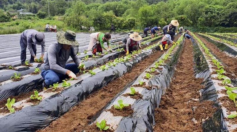 합천군 농업창업단지 입교생 공동 실습농장 시범 운영