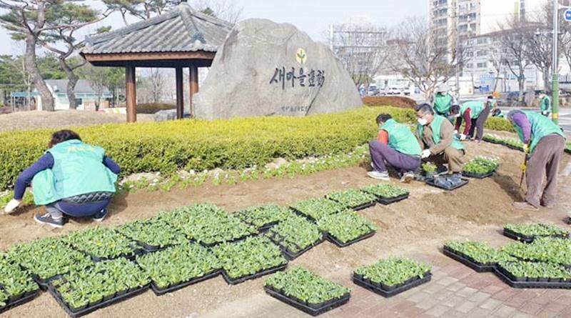새마을운동합천군지회, 봄 마중을 위한 봄꽃 식재