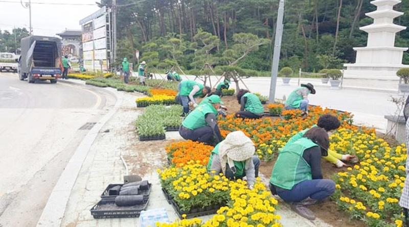 새마을운동합천군지회, 분위기 전환 여름꽃 식재