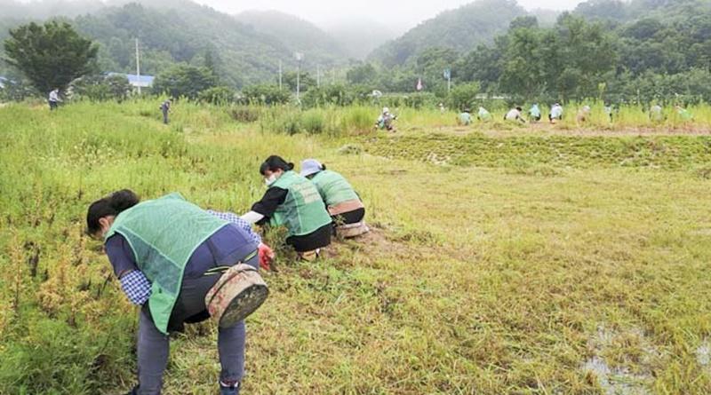 대양면 주민자치위원회, 새마을협의회 꽃동산 환경정비